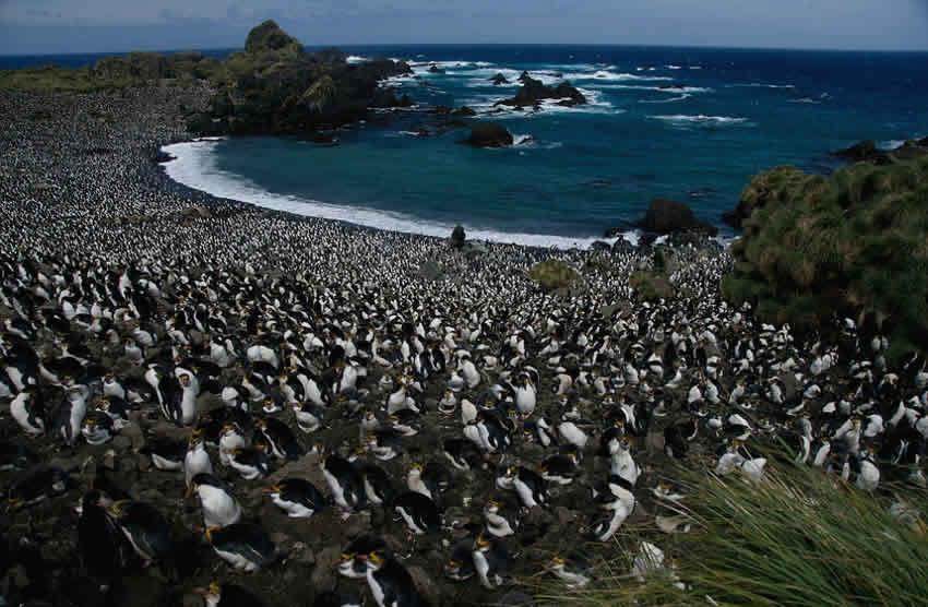 Le Montagne della Follia - Macquarie Island